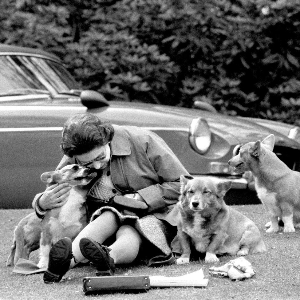 One Queen, one MG, three corgis, one Leica.